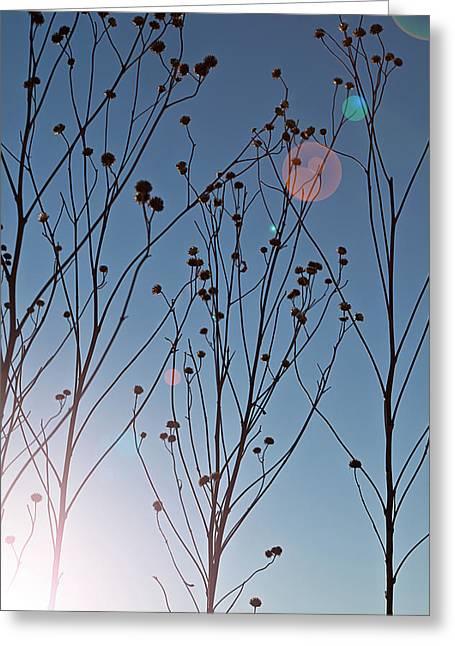 Prairies Greeting Cards - Prairie Plants Greeting Card by Steve Gadomski