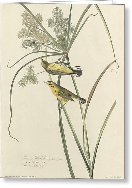 Prairies Greeting Cards - Prairie Warbler Greeting Card by John James Audubon