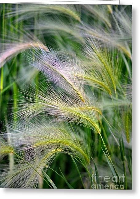Garden Scene Greeting Cards - Prairie Wind Greeting Card by Deb Halloran