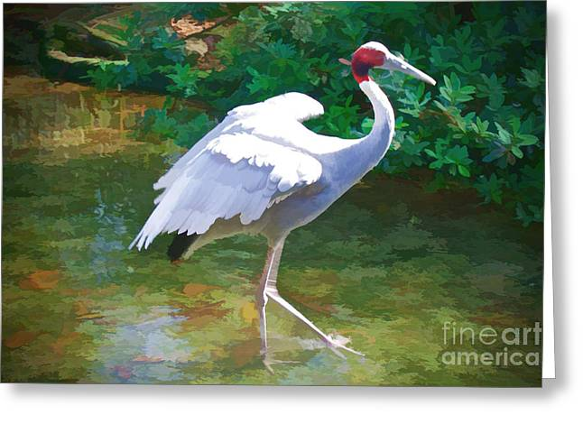 Wild Birds Greeting Cards - Prancer Greeting Card by Judy Kay