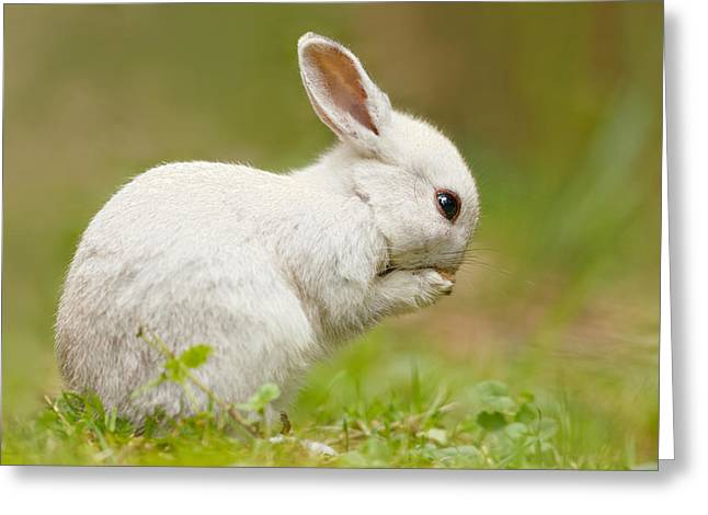 Praying White Rabbit Greeting Card by Roeselien Raimond