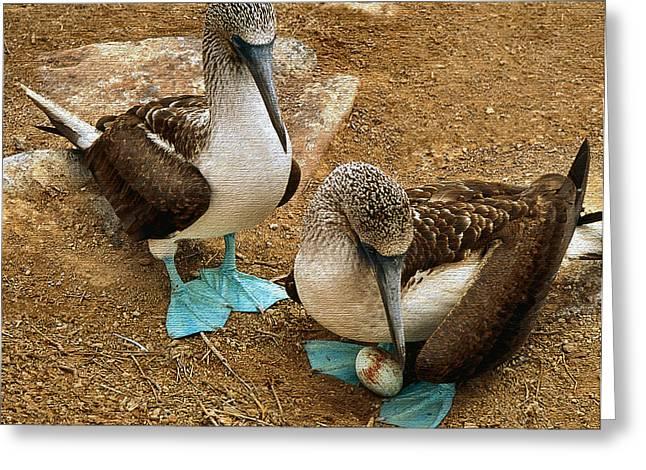 Galapagos Birds Greeting Cards - Pre Natal Checkup Greeting Card by Joe Bonita