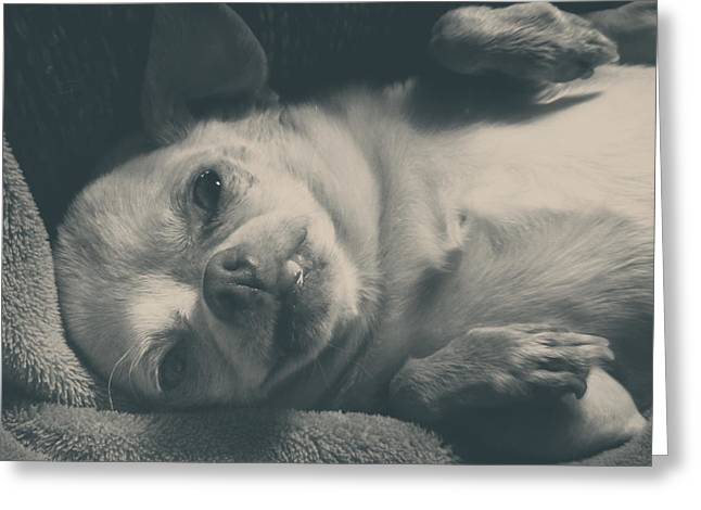 Dog Portraits Greeting Cards - Precious Greeting Card by Laurie Search