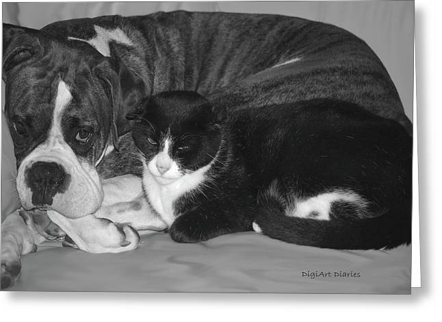 Boxer Digital Greeting Cards - Precious Pals Greeting Card by DigiArt Diaries by Vicky B Fuller