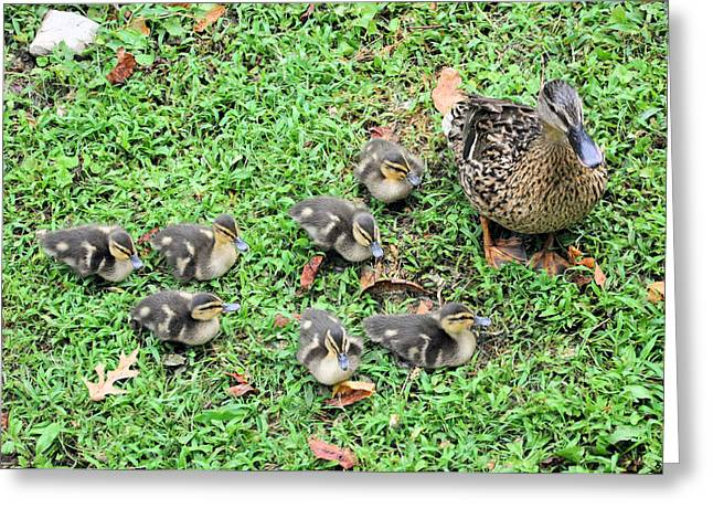Ducklings Greeting Cards - Precious Seven Greeting Card by Jan Amiss Photography
