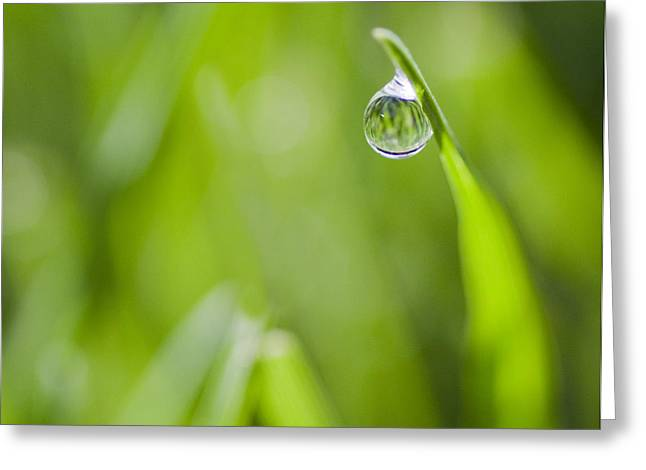 Water Drop Greeting Cards - Precise Greeting Card by Rebecca Cozart