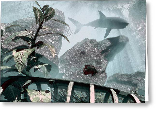 Underwater Scenes Greeting Cards - Predator Greeting Card by Richard Rizzo