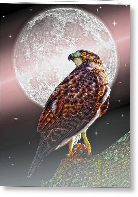 Giclée Fine Art Greeting Cards - Predator Greeting Card by Tom York Images