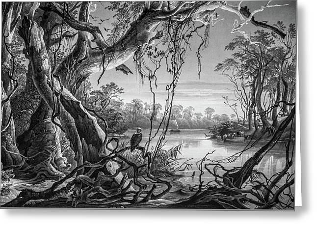 Preditor In Paradise Greeting Card by Douglas Barnett