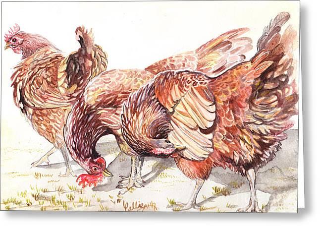 Bird Art Greeting Cards - Preening Greeting Card by Callie Smith