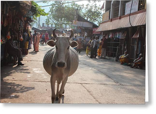 Pregnant Mama Cow, Rishikesh Greeting Card by Jennifer Mazzucco