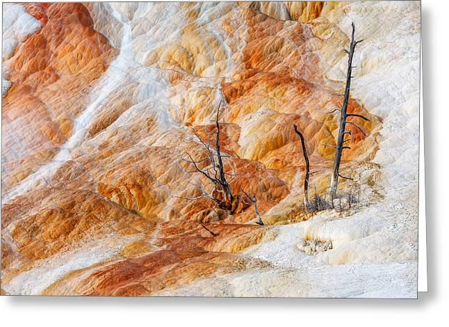 Prehistoric Trees Greeting Card by Todd Klassy
