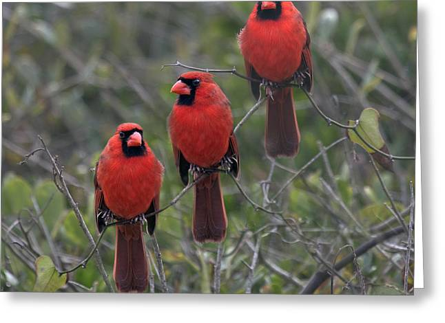 Pretty As A Picture Greeting Card by Betsy Knapp
