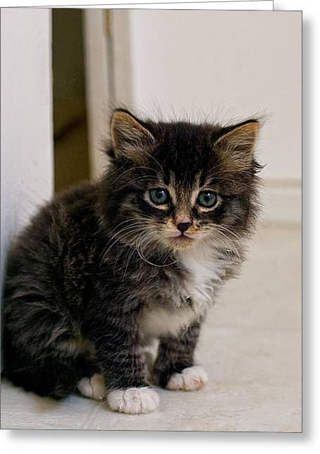 Shelter Animals Greeting Cards - Pretty Baby Greeting Card by Lynn Andrews