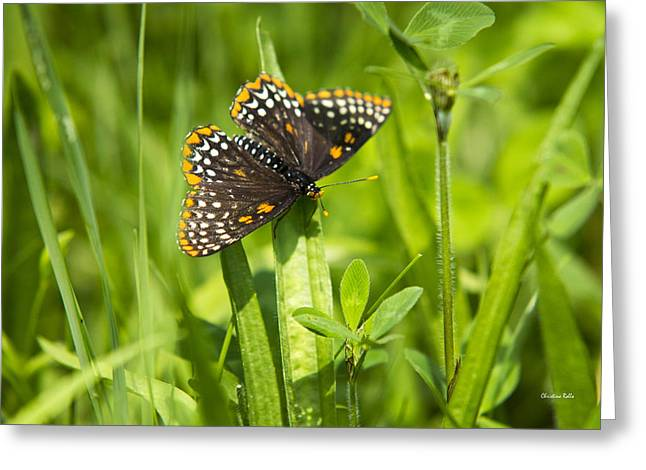 Checkerspot Greeting Cards - Pretty Baltimore Checkerspot Butterfly Greeting Card by Christina Rollo