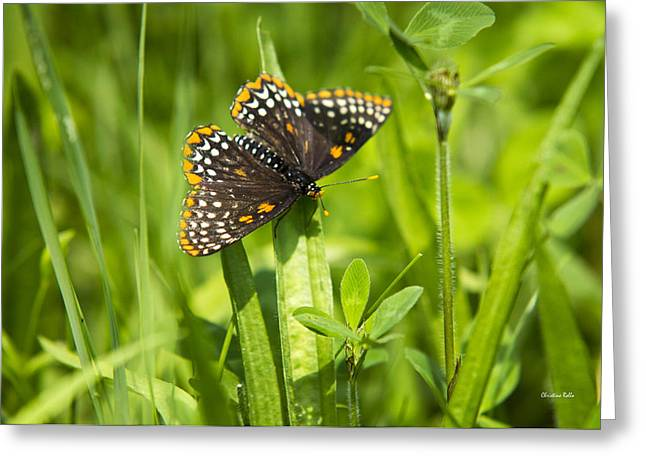 Baltimore Checkerspot Butterfly I Greeting Card by Christina Rollo