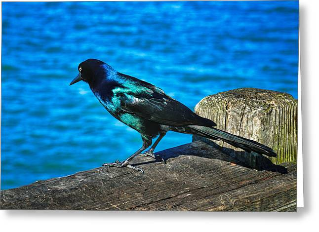Ocean Art Photography Greeting Cards - Pretty Boy Greeting Card by Dave Bosse