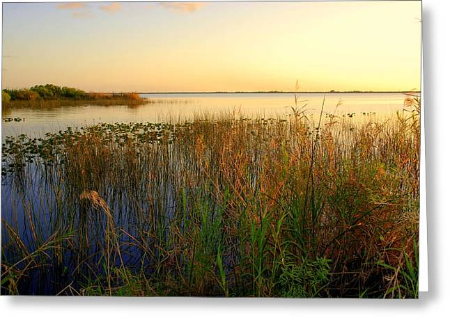 Soft Light Greeting Cards - Pretty evening at the lake Greeting Card by Susanne Van Hulst