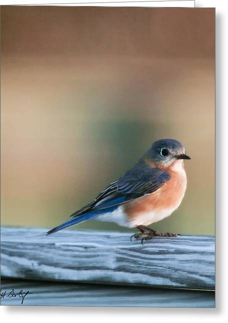 Pretty In Blue Greeting Card by Phill Doherty