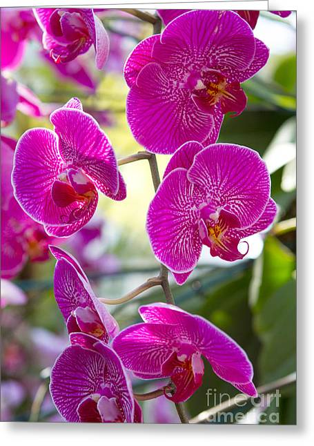 Pretty In Fuchsia Greeting Card by A New Focus Photography
