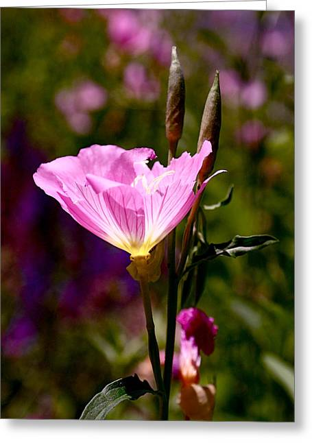 Purple Flower Greeting Cards - Pretty in Pink Greeting Card by Rona Black
