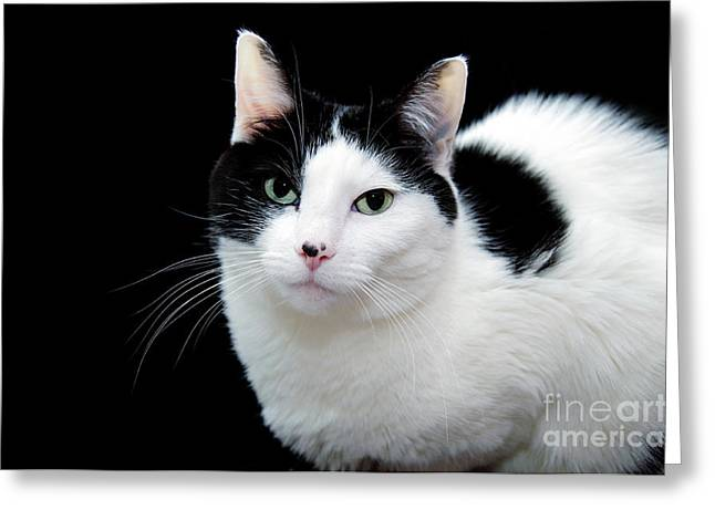 Sweat Greeting Cards - Pretty Kitty Cat 1 Greeting Card by Andee Design