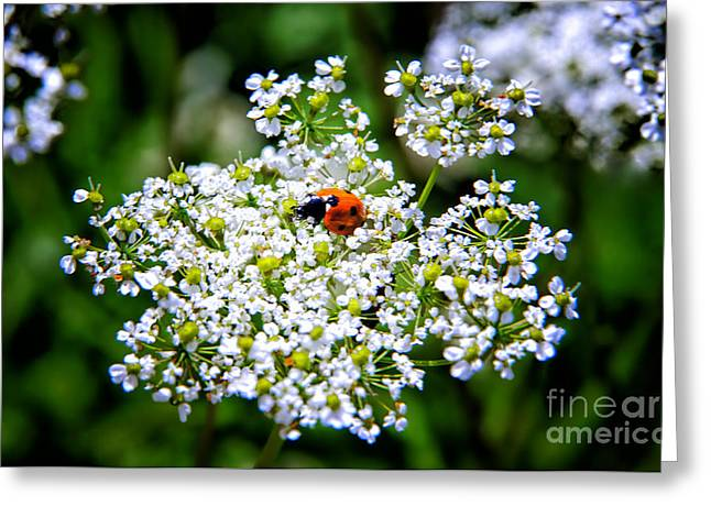 Best Sellers -  - Eating Entomology Greeting Cards - Pretty Little Ladybug Greeting Card by Mariola Bitner
