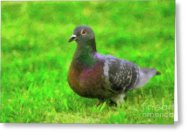 Feral Pigeon Greeting Cards - Pretty Pigeon Greeting Card by Betty LaRue
