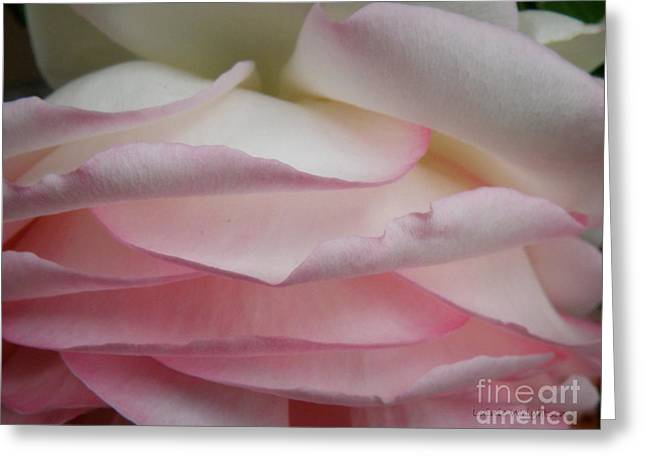 Pretty Pink Petals Greeting Card by Lainie Wrightson