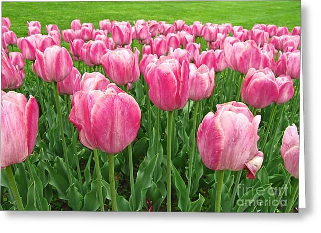 Enhanced Greeting Cards - Pretty Pink Tulips Greeting Card by Adri Turner