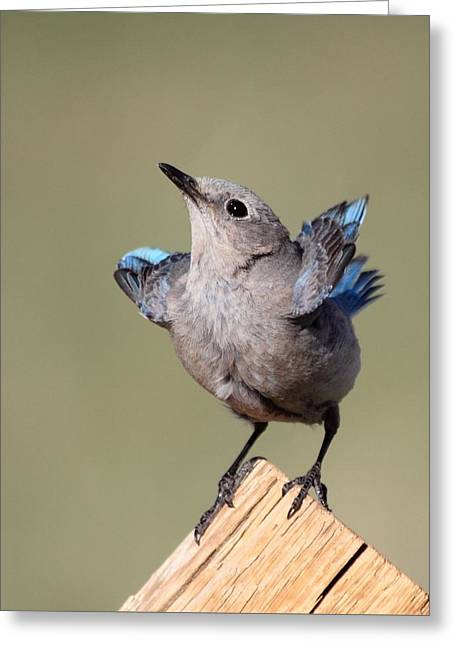 Rmnp Greeting Cards - Pretty Pose Greeting Card by Shane Bechler