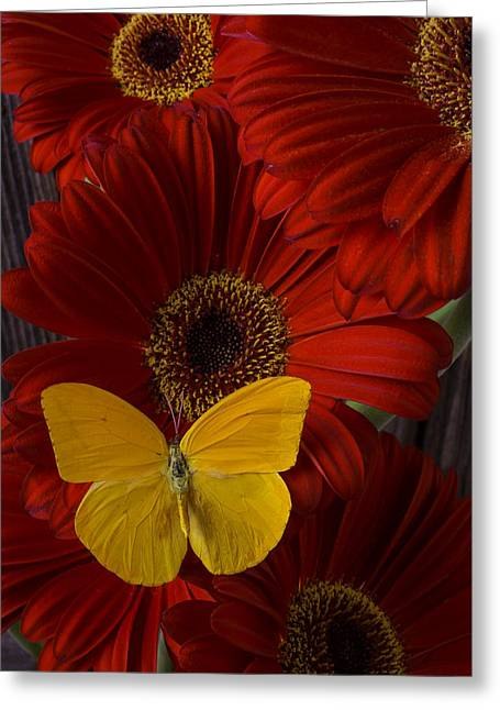Yellow Butterfly Greeting Cards - Pretty Yellow Butterfly Greeting Card by Garry Gay