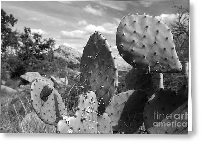 Nature Study Greeting Cards - Prickly Pear at Enchanted Rock Greeting Card by Greg Kopriva