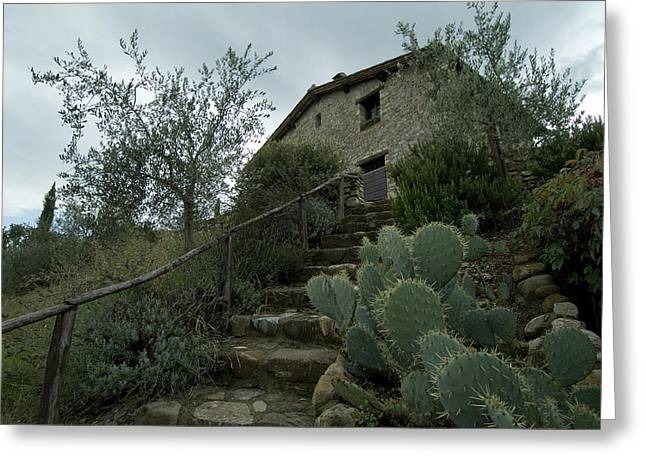 Chianti Greeting Cards - Prickly Pear Cactus At The Bottom Greeting Card by Todd Gipstein
