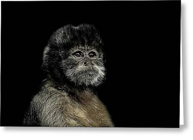 Primate Greeting Cards - Pride Greeting Card by Paul Neville