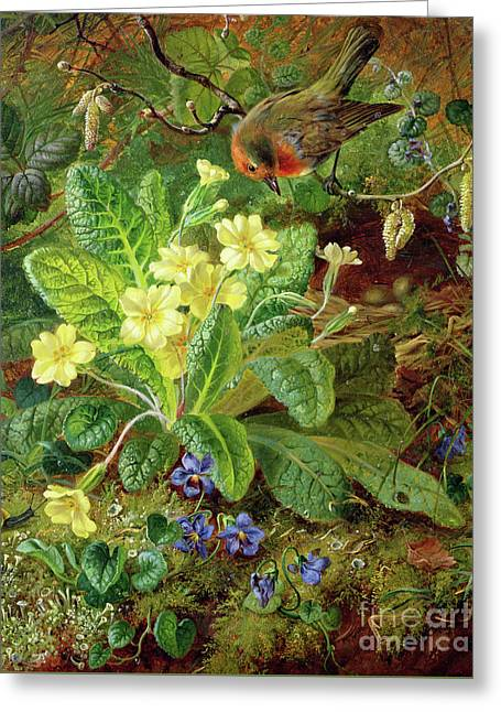 Primrose And Robin Greeting Card by William John Wainwright