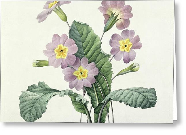 Primrose Greeting Card by Pierre Joseph Redoute