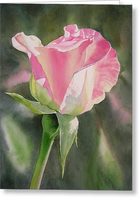 Bud Paintings Greeting Cards - Princess Diana Rose Bud Greeting Card by Sharon Freeman
