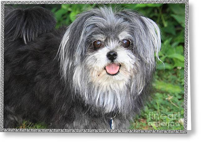 Princess Dog Greeting Card by Terry Wallace