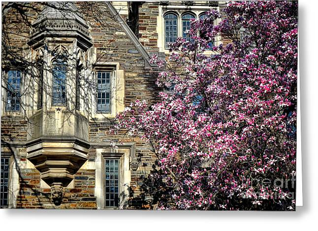Magnolia Tree Greeting Cards - Princeton University Memories Greeting Card by Olivier Le Queinec