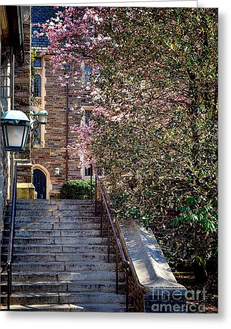 Magnolia Tree Greeting Cards - Princeton University Old stairway Greeting Card by Olivier Le Queinec