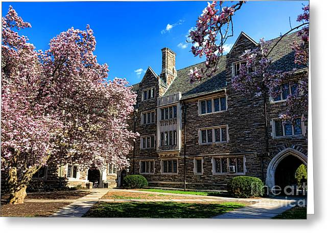 Magnolia Tree Greeting Cards - Princeton University Pyne Hall Courtyard Greeting Card by Olivier Le Queinec