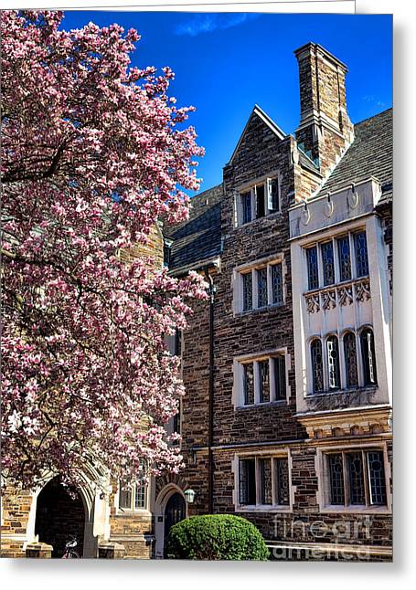 Magnolia Tree Greeting Cards - Princeton University Pyne Hall Magnolia  Greeting Card by Olivier Le Queinec