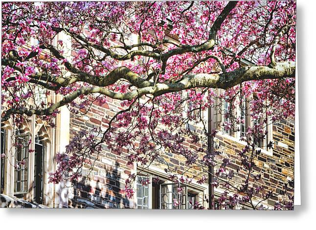 Magnolia Tree Greeting Cards - Princeton University Springtime Celebration  Greeting Card by Olivier Le Queinec