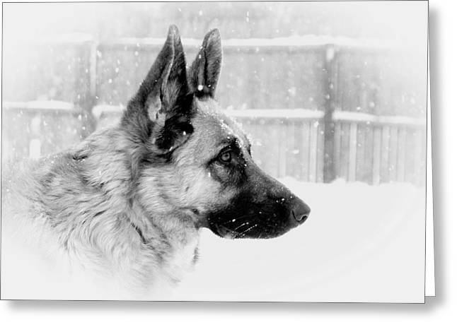 Gsd Greeting Cards - Profile Of A German Shepherd Greeting Card by Angie Tirado