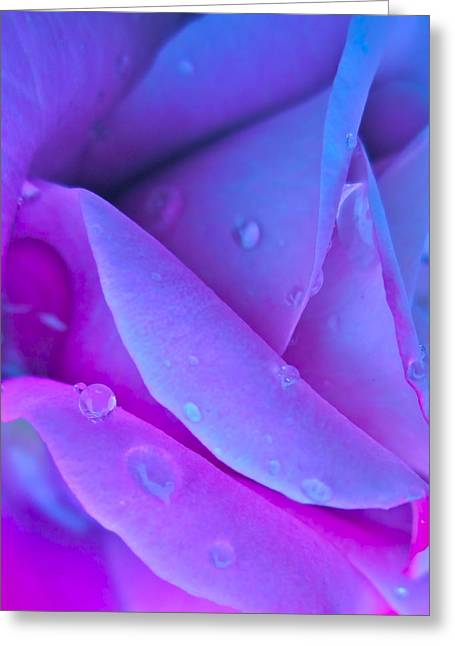 Profile Of A Rose Greeting Card by Gwyn Newcombe