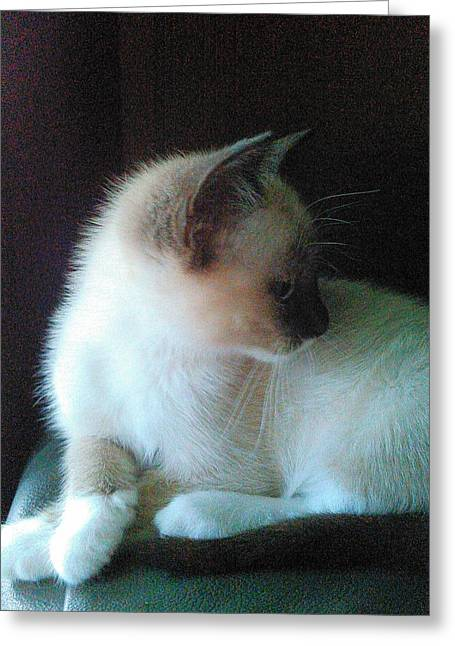 Becky Greeting Cards - Siamese Kitten Profile Greeting Card by Becky Burt