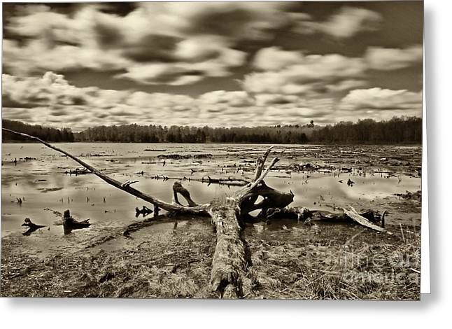 Promised Land Greeting Cards - Promised Land State Park PA 3 Greeting Card by Jack Paolini