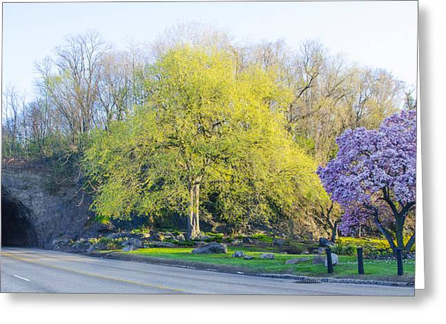 Kelly Drive Digital Art Greeting Cards - Promontory Rock in Spring - Philadelphia Greeting Card by Bill Cannon