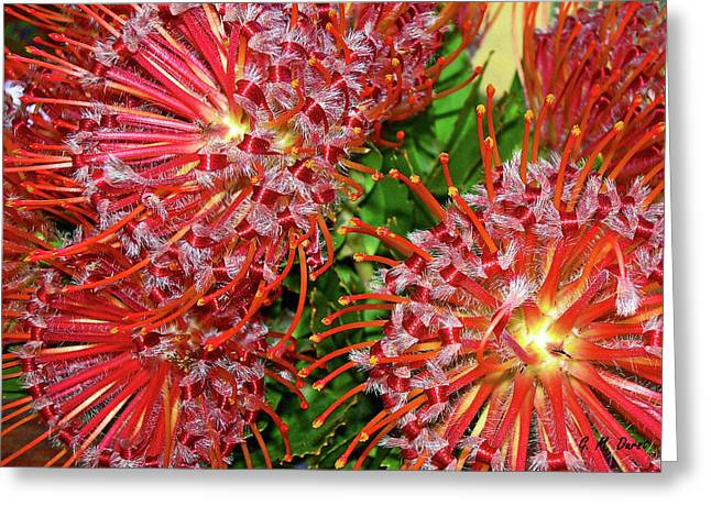Proteas Greeting Cards - Protea Joy Greeting Card by Michael Durst